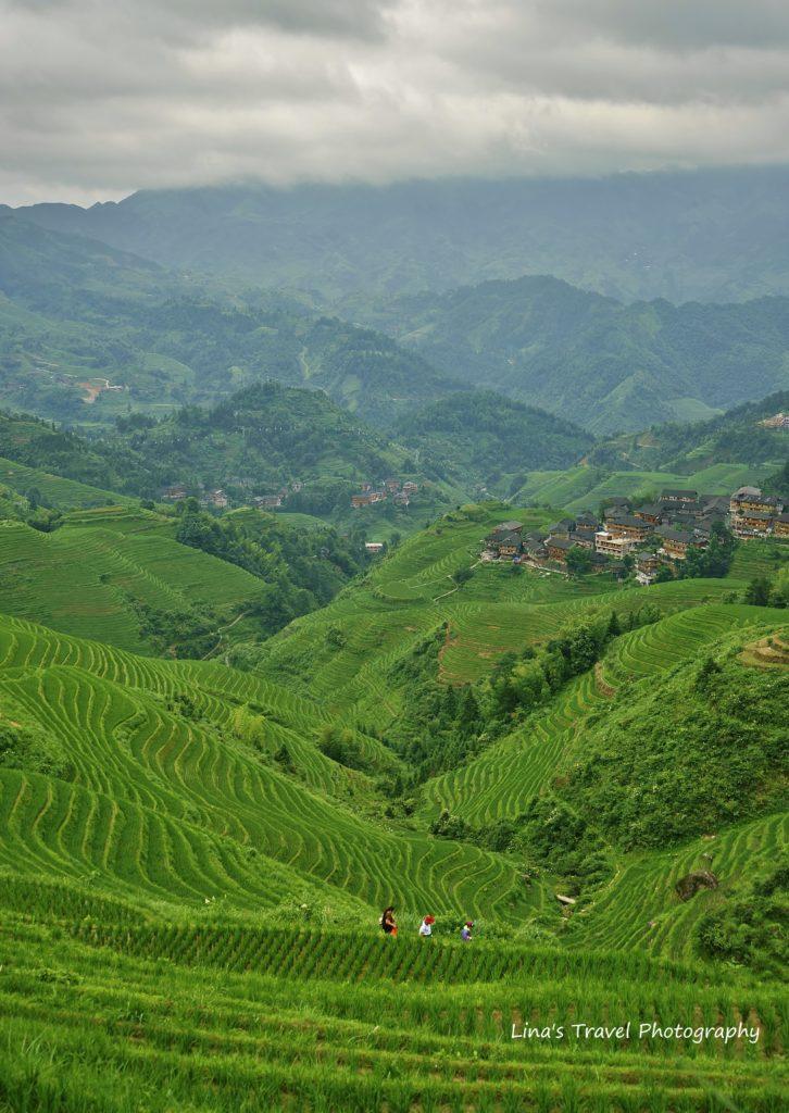 Longji Rice Terracces in Summer time, Guangxi, China